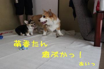 遊ぶか!!