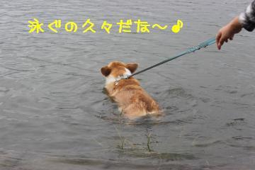 久々泳ぐ。