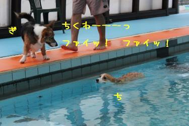 ちくわん強制遊泳