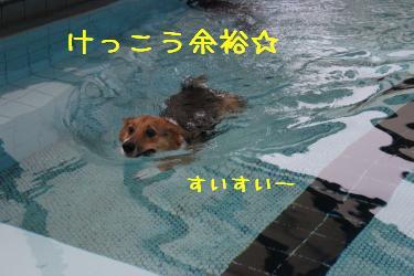 銀ちゃん強制遊泳