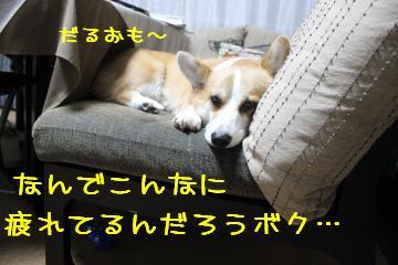 疲れが取れないんだよね。