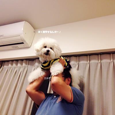 写真 2014-09-28 19 19 35(1)
