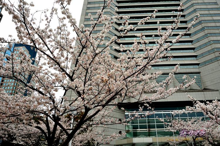 横浜散策1(4)変更済