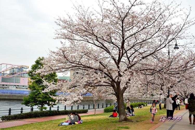 横浜散策2(4)変更済