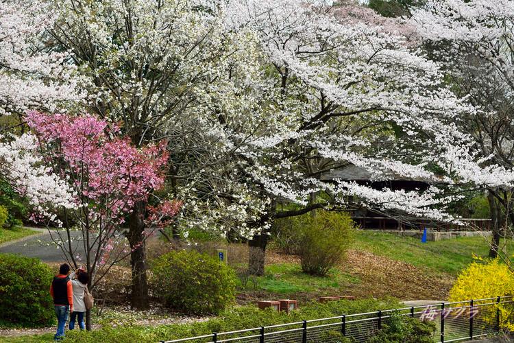 昭和記念公園3(1)変更済
