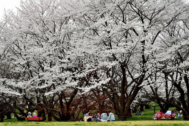 昭和記念公園3(8)変更済
