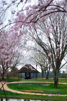 昭和記念公園3(7-2)変更済