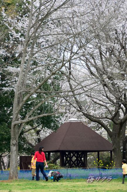 昭和記念公園3(4)変更済