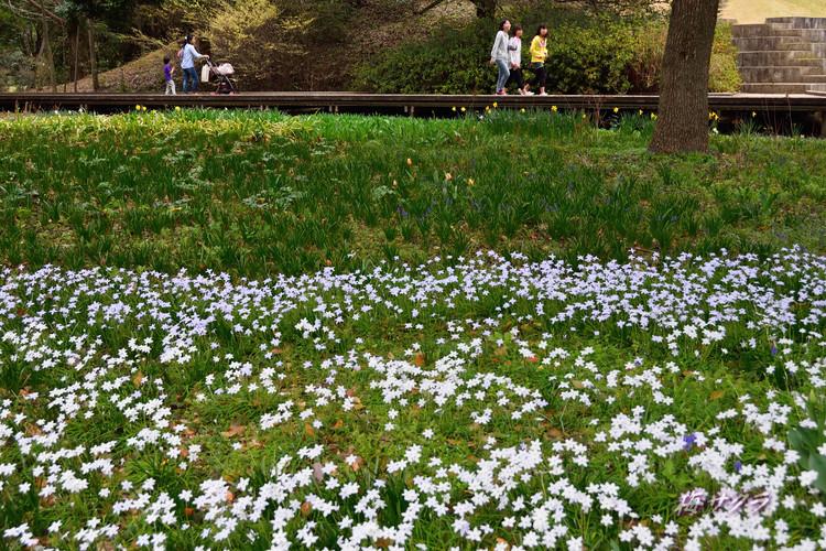 昭和記念公園6(5)変更済