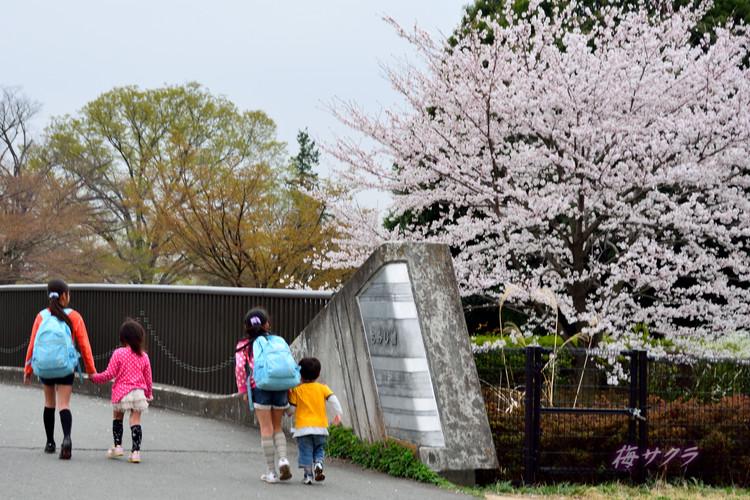昭和記念公園6(9)変更済