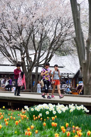 昭和記念公園6(6-1)変更済