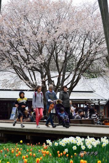 昭和記念公園6(6-2) 変更済