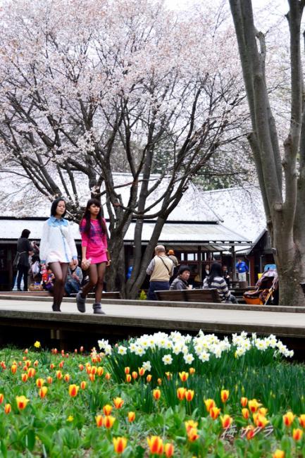 昭和記念公園6(7)変更済