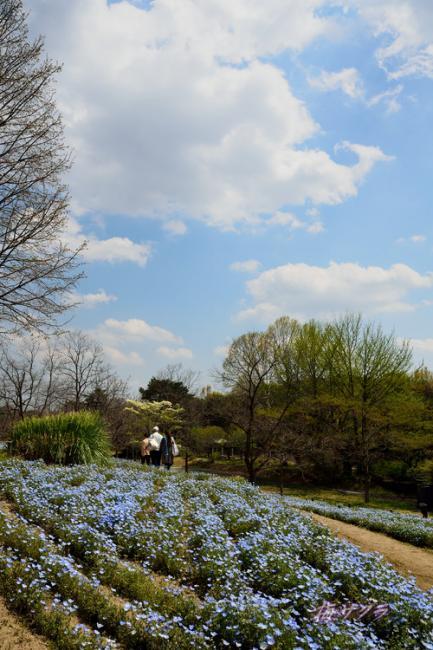 昭和記念公園1(4)変更済