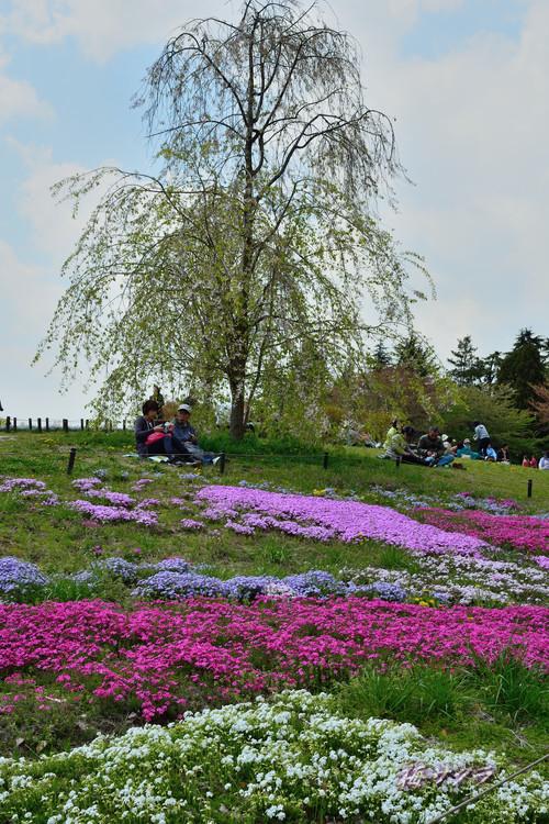昭和記念公園1(5)変更済