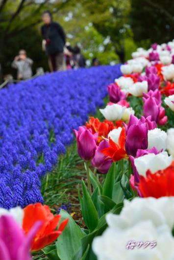 昭和記念公園1(8-2)変更済