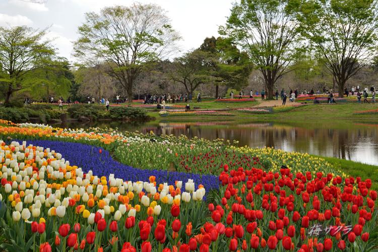 昭和記念公園4(6)変更済
