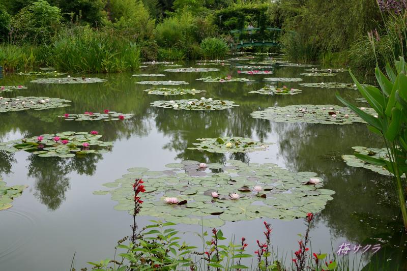 花の美術館2(水の庭4)変更済