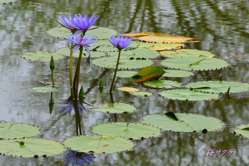花の美術館2(水の庭7)変更済