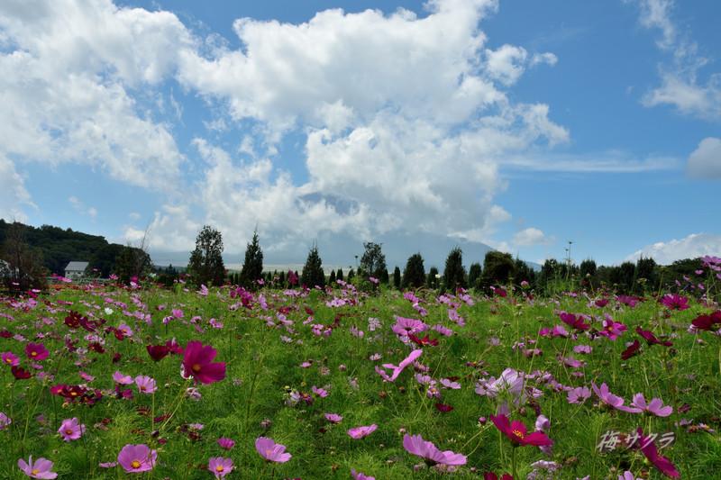 花の都公園1(8)変更済
