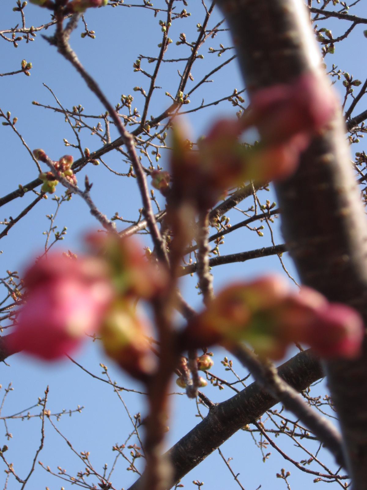 立春2月4日 023