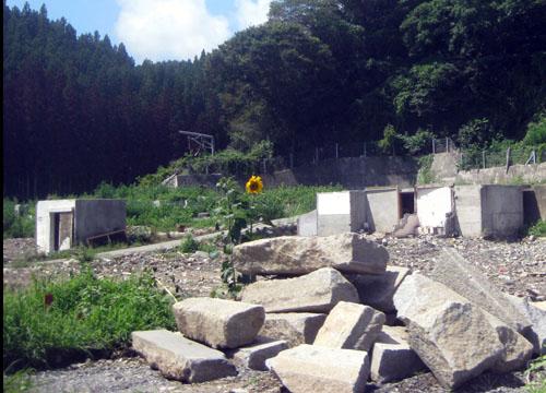 2011年 とある場所 瓦礫の中の一輪の向日葵