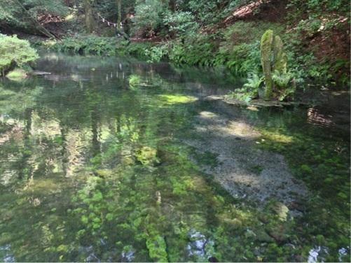 阿蘇 池山水源 2