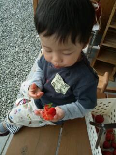 20130519_苺狩り2