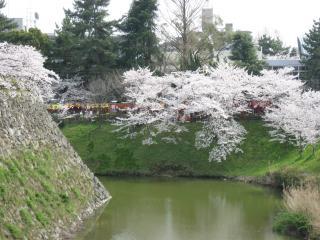 sakurakoriyama8