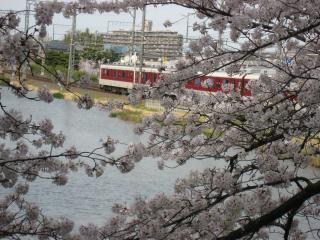 sakurakoriyama9