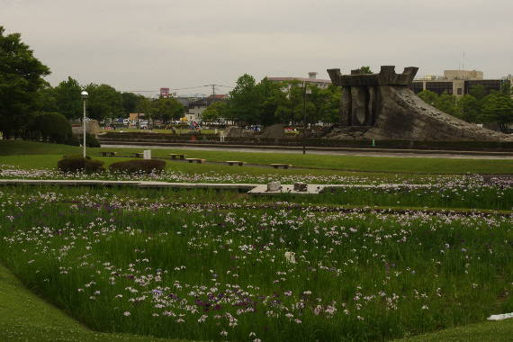 久留米中央公園の花菖蒲1