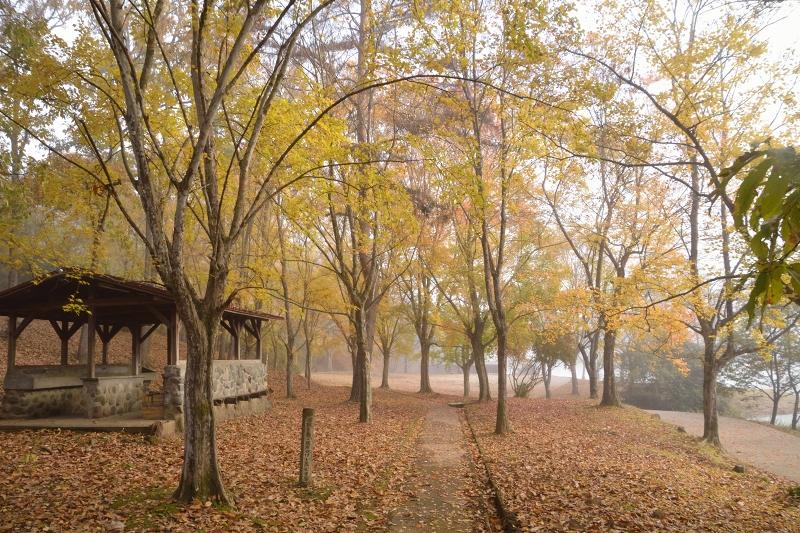 萩尾公園 (4)