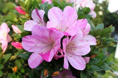 紫苑042