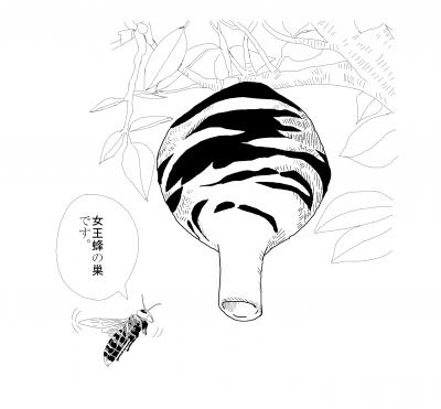 スズメバチ女王蜂の巣