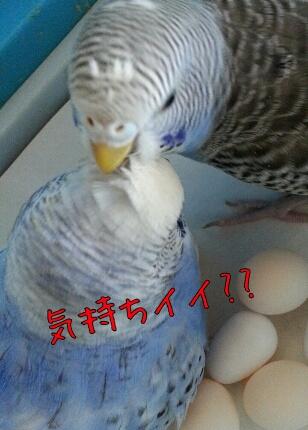 fc2_2013-10-23_16-04-57-864.jpg