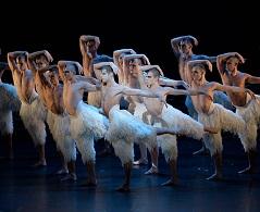 Swan14S.jpg