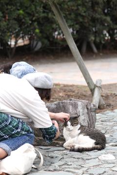 江ノ島のネコポイント