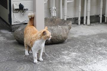 しっぽくるんネコはあまえたさん