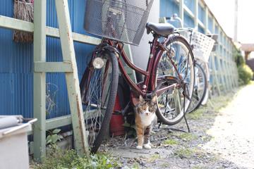 せんべい屋のネコ