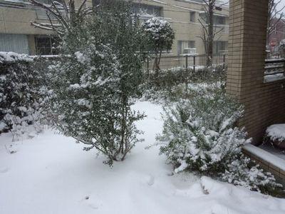 YUKINIWA_1265.jpg