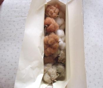 cotton_convert_20131126084435.jpg
