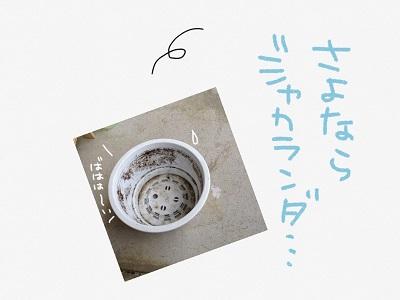 IMG_4774.jpg