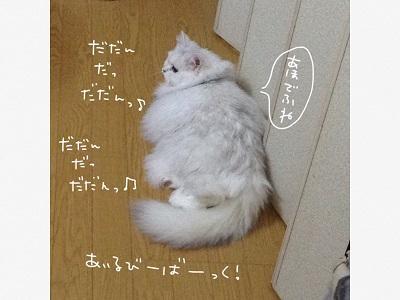 IMG_5091.jpg