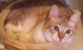 あゆ鍋猫1