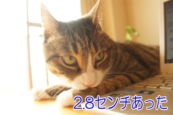 2013728-4.jpg