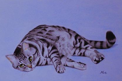 ラリー子猫