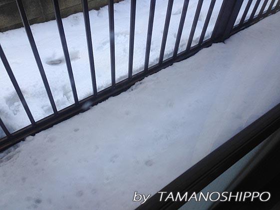 大雪の次の日 ベランダ
