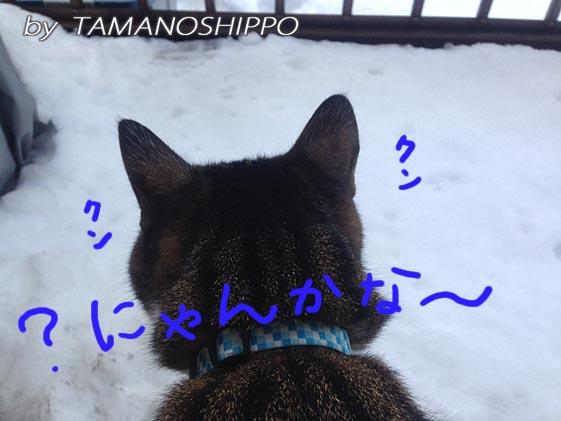 雪を確認する猫