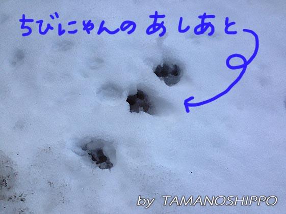 雪に肉にゅう