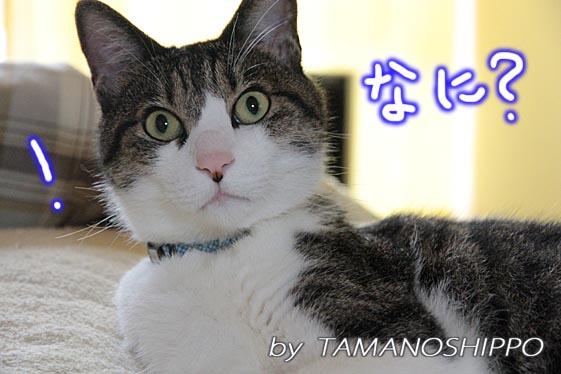 音にびっくりする猫